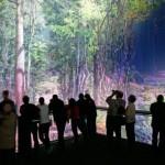 AMAZONIEN_Plattform2