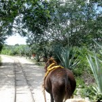 Muli Truck - Hacienda Sotuta de Peon