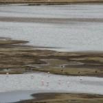 Flamingos Lagune Puno