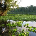 Naturparadies Costa Rica
