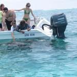 Keine Angst vorm Anfassen - die Ammenhaie sind friedlich