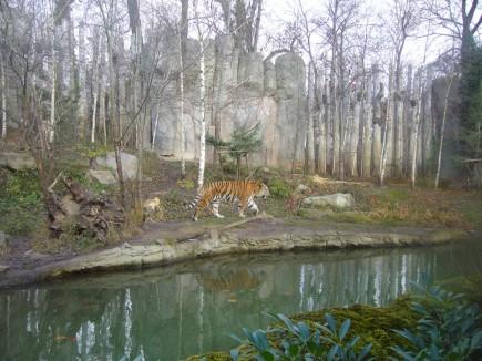 dem Tiger knurrt der Magen