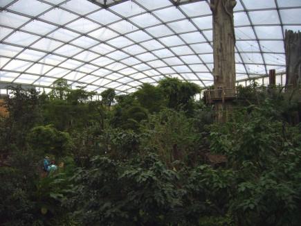Blick in den Leipziger Regenwald