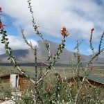 Blick auf den Vulkan Tres Virgenes