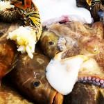 frischer Fisch Holbox