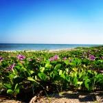 Strandvegetation Sisal